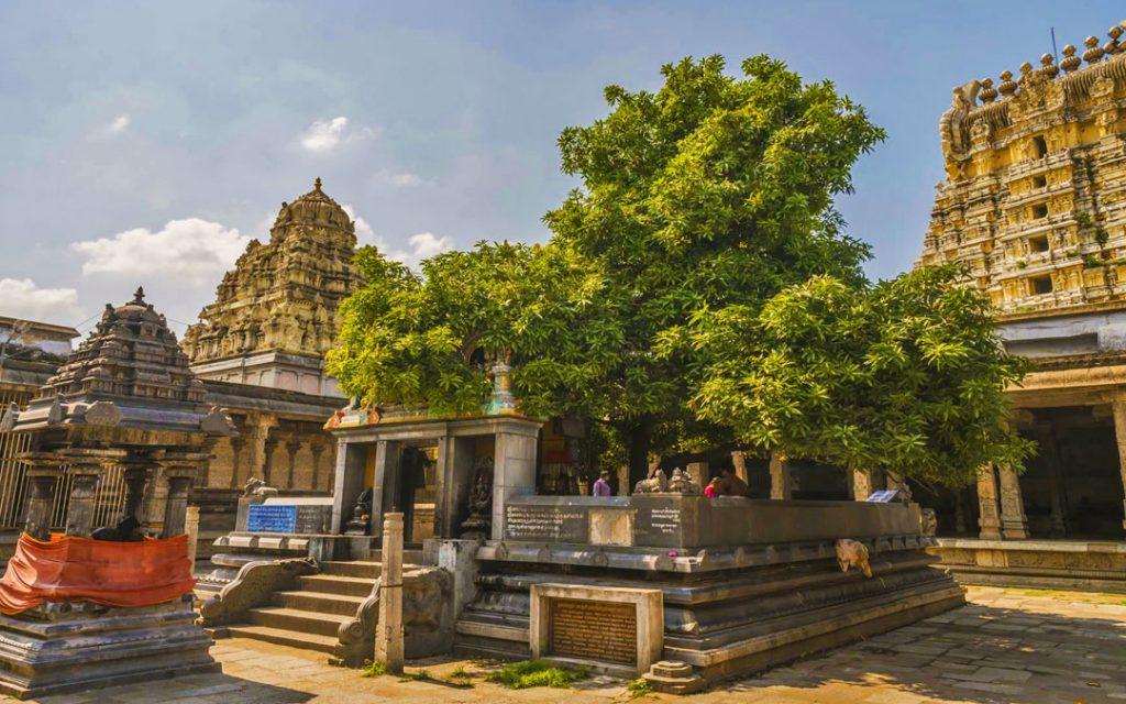 ekambareswarar-temple-kanchipuram