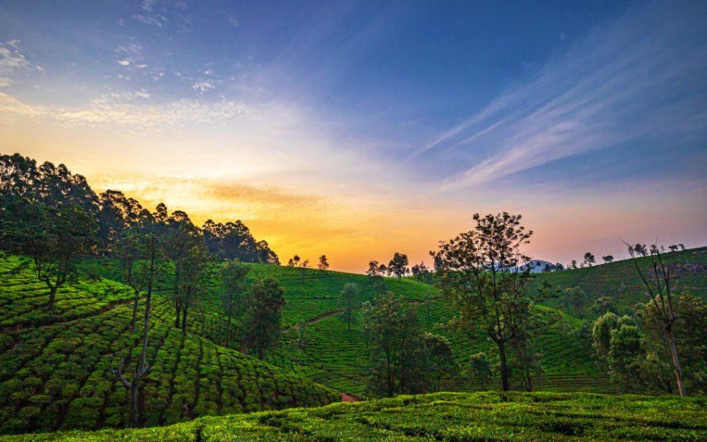 Sunrise and fog rise over the beautiful tea estate in Ooty, Tamilnadu