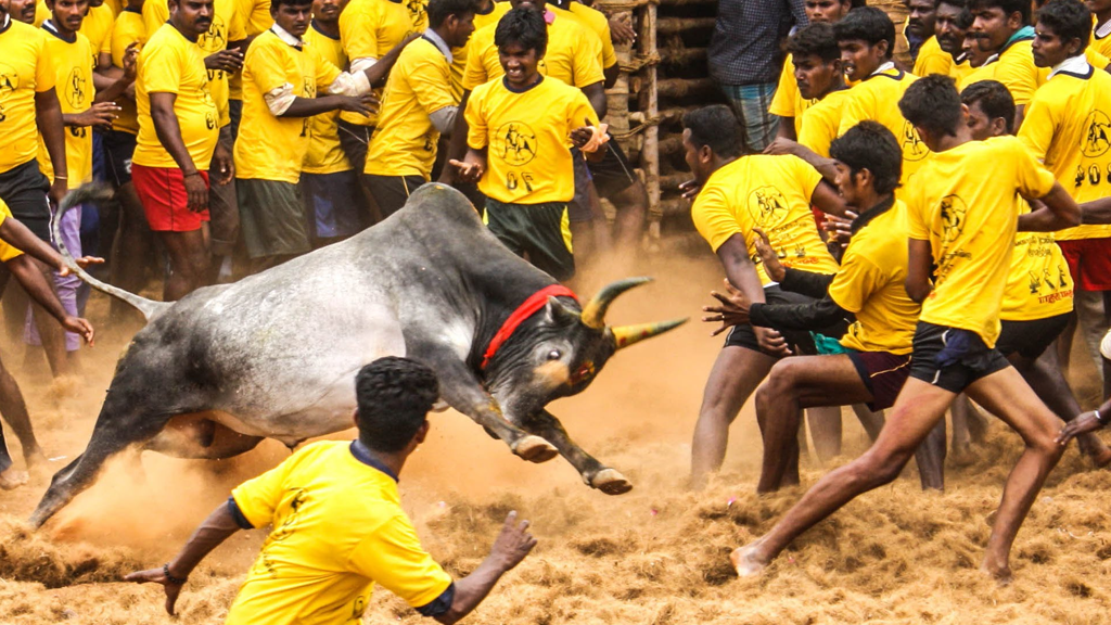 Popular places to visit in Tamilnadu for Jallikattu?