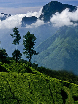 wilderness-of-nilgiri