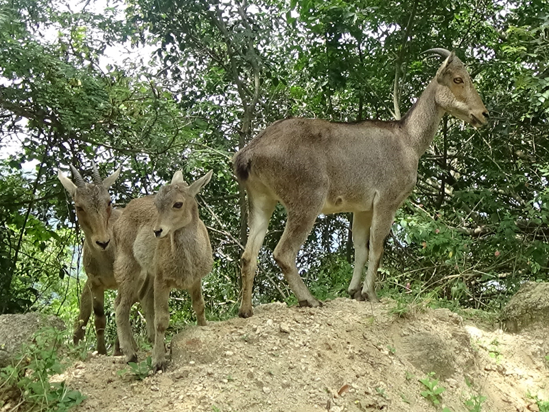 Coimbatore, Indira Gandhi Wildlife Sanctuary and National Park - Tamilnadu Wildlife Sanctuaries Tour Packages - Taminadu Tourism Travel