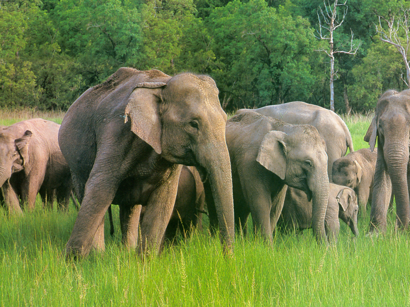 Mudumalai - Tamilnadu Wildlife Sanctuaries Tour Packages - Taminadu Tourism Travel