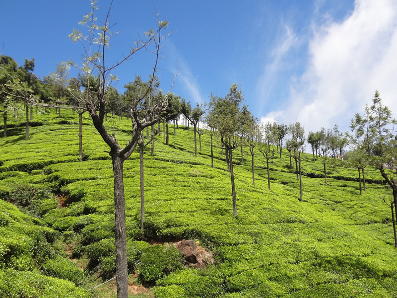 Ooty - Honeymoon in Tamilnadu - Taminadu Tourism Travel