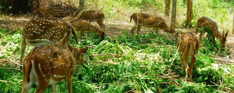 amirthi-zoo-park